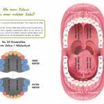 Alle meine Zähne - Zahnkalender (Innenansicht)