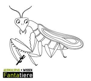 Ausmalspaß + Wissen: Fantatiere. Gliederfüßer: Insekten: Gottesanbeterin