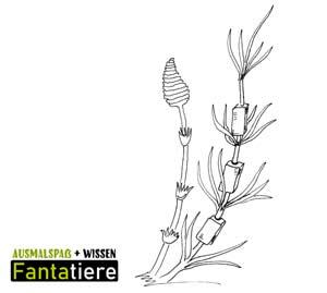 Ausmalspaß + Wissen: Fantatiere. Pflanzen: Ackerschachtelhalm