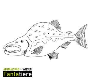 Ausmalspaß + Wissen: Fantatiere. Wirbeltiere: Fische: Buckellachs